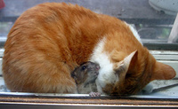 Cat and Mouse Together 03