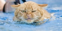 Angry Cat Swimming