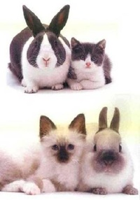 Bunnies, Cats and Dogs Look Alike