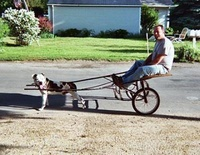 2 Wheels Sled Dog