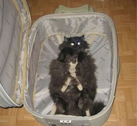 Darling, I have packed everything I need. Shall we go now?