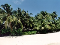 maldive beach 04