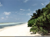 maldive beach 08