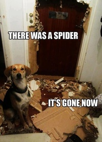There was a spider