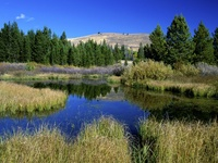 Beaver Ponds, Sun Valley, Idaho