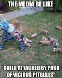 Child Attacked by pack of vicious pitbulls