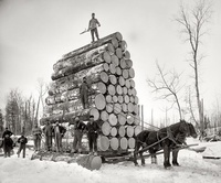 Extreme timber transport with horses carriage